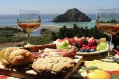 guest-picnic