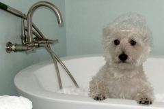 pet-bath