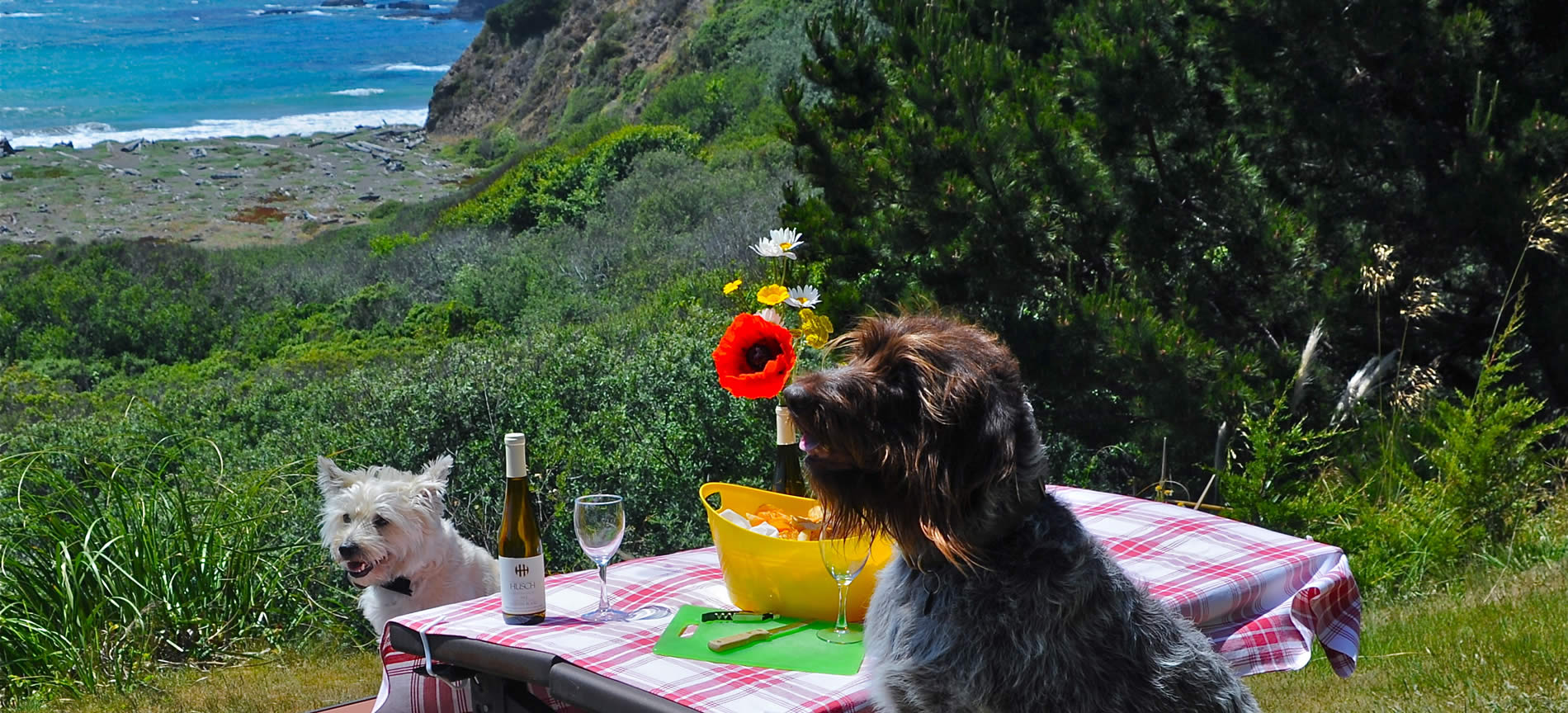 mendocino-coast-pet-friendly lodging